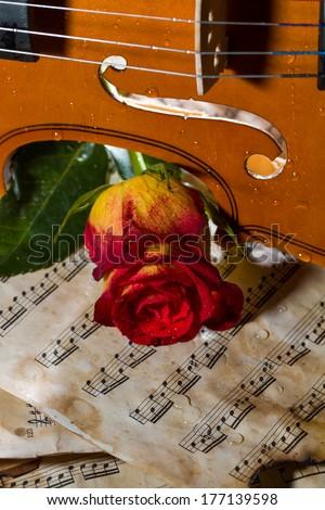 Violin sheet music and rose black composition still life music
