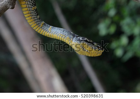 Viper photography with background blurry #520398631