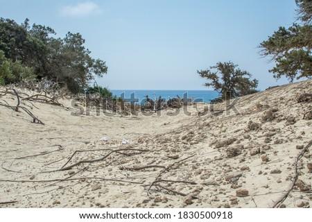 Virgin landscape in Chrissi island, Greece. White, coast,cedar forest
