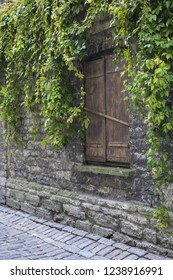 Stock photo of Virginia Creeper branches hanging on old limestone wall like green curtain. Window closed by shutter. Photographed in Tallinn old town, Estonia.