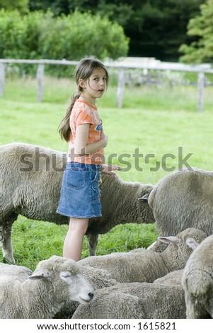Visiting a sheep farm