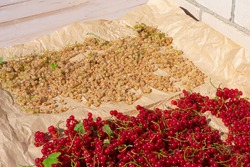 Vitamin C source, two sort of currants red and white with twigs are lying on paper on bright sun for ventilating