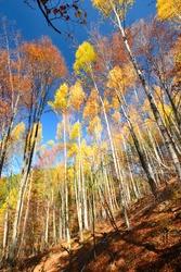 Vitosha mountain at autumn color, Sofia, Bulgaria. Autumn colored forest.  Selective focus.