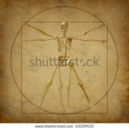 human skeleton drawing. human skeleton diagram