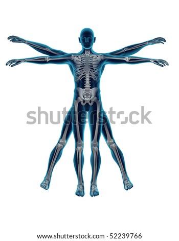 Vitruvian man on White background