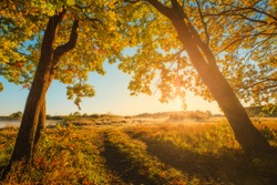 Vivid autumn background. Autumn landscape. Fall scene. Forest with autumal trees in the morning.