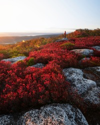 Vivid Autumn reds in the Dolly Sods Wilderness of West Virginia on an early October morning.