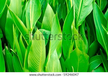Vivid coloured green leaves close up