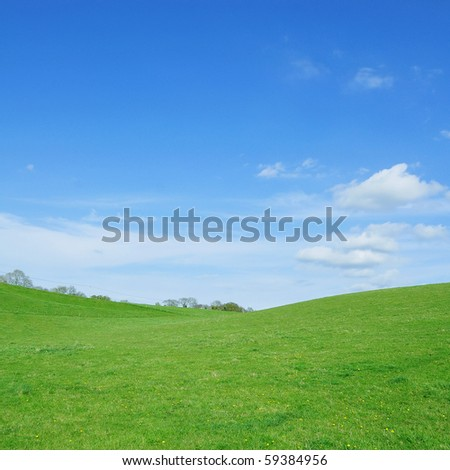 Vivid Green Grass and Blue Sky