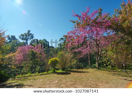 Vivid nature background forest pink flower trees and green leaves vivid nature background forest pink flower trees and green leaves contrast with clear dark mightylinksfo