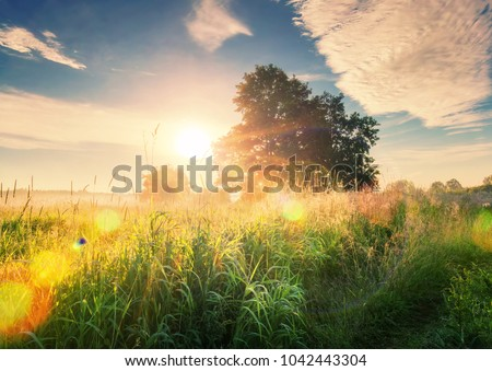 Vivid summer sunrise on green meadow and sunbeams through tree in the morning. Scenery landscape of bright sunrays over green field with large tree. Summer nature. Natural morning sunlight.
