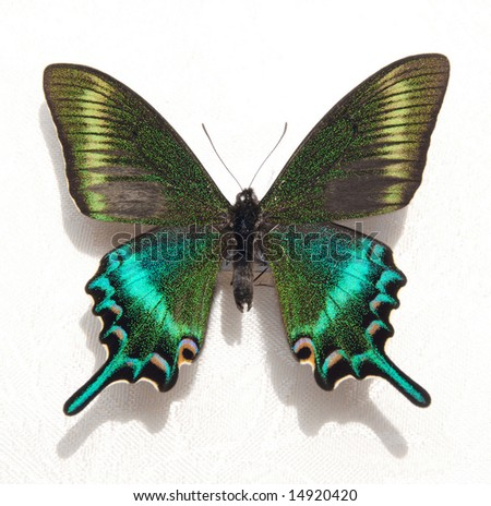 Vivid Turquoise and Green Butterfly