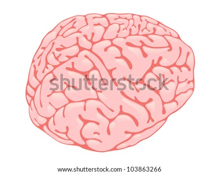 Volumetric pink brain form in three-quarters - stock photo
