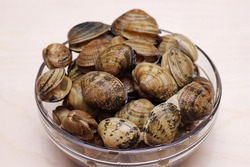 Vongole clams are ready for cooking. Fresh clams. Sea delicacy.
