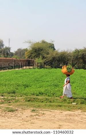 VRINDAVAN,INDIA -  MARCH 18: Indian woman walking home from the well with big package of plants on her head on 18 March,2012 in Vrindavan, India.  0 % of the population are involved in agriculture.