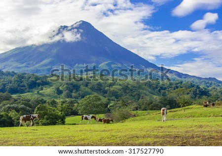 Vulcano Arenal - Horses on pasture #317527790