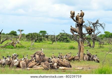 vultures meeting