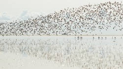 Waders Migrating birds