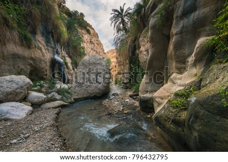 Wadi ibn al hammad (Jordan), fed by a number (hot) springs, brought a beautiful erosion landscape in the soft sandstone. At microlevel this water allows an incredible microclimate with even ferns.  Stockfoto ©