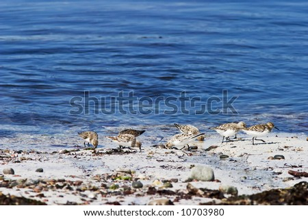 Wading birds at the beach