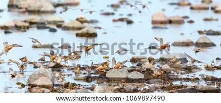 Wading birds at the seashore