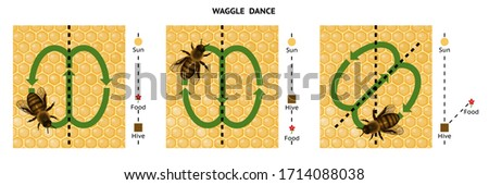 Waggle dance. Honeybee dance language.  Dance language is used by an individual worker to communicate to one or more other workers.