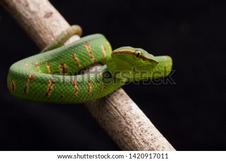 Green Snake on Tree Branch Images and Stock Photos - Page
