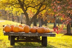 Wagon full of pumpkins for sale in October