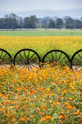 Wagon wheels decorated and used as fence to separate 2 cultivated areas.