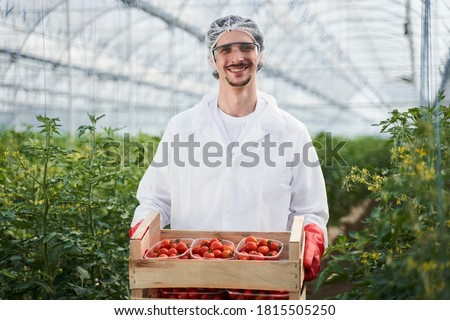 Waist up portrait of cheerful young man in uniform standing in greenhouse and holding box of tomatoes Foto stock ©