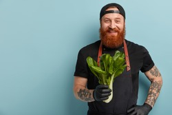 Waist up shot of cheerful ginger cook holds green bokchoy bought at market, promots healthy nutrition, wears black cap, apron, gloves, wants to make vegetable salad, stands indoor over blue wall