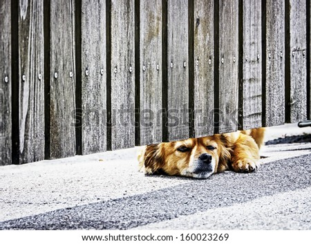 waiting dog at a fence