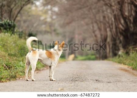 Waiting Lonely Dog