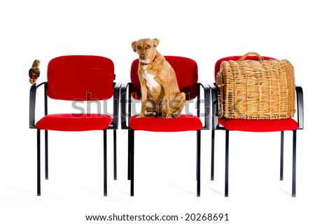 waitingroom veterinary with bird dog and cat at the seats