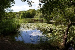 Wake Valley Pond in Epping Forest