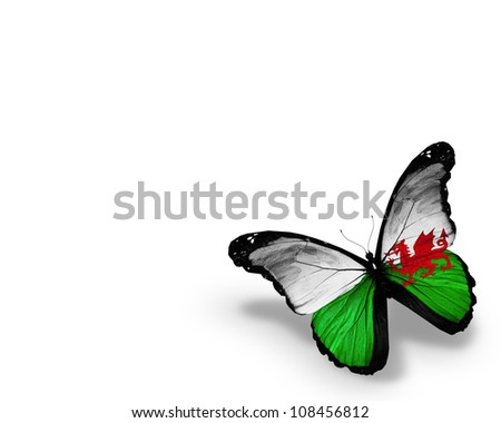 Wales flag butterfly, isolated on white background