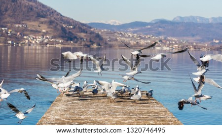 Walk by the lake and click birds pic on a sunny day.