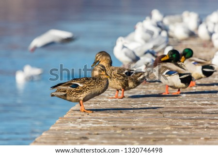 Walk by the lake and click duck and birds pic on a sunny day.