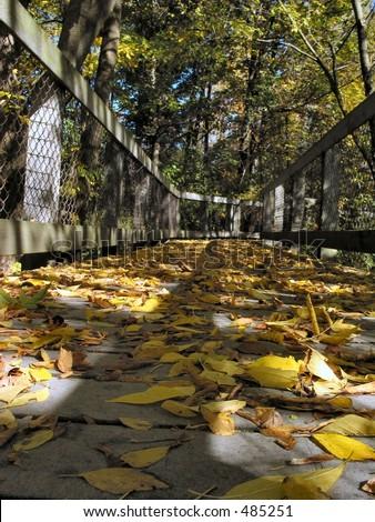 Walk in Autumn - stock photo