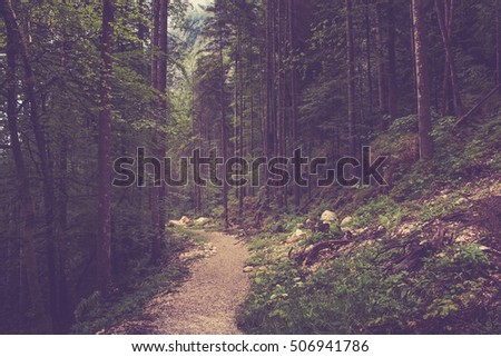 Walk in Hallstatt, Austria, Europe. Around rich green trees, pines. Soul rests. Nature sends rich and deep colors, no people. Summer, spring, fall away day. Poster image, photography. Instagram filter