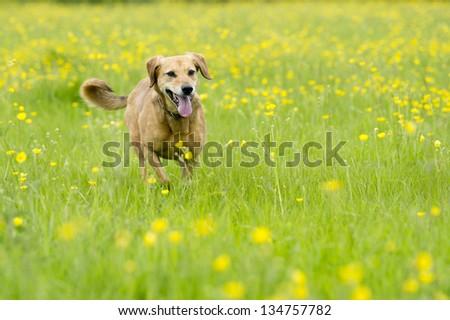 Walk in the buttercups