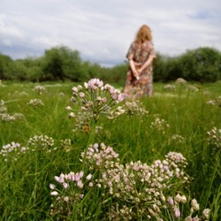 Walk in the meadow in bloom. Allium ursinum, known aswild garlic,ramsons,buckrams,broad-leaved garlic,wood garlic,bear leekorbear's garlic