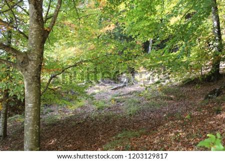 walk in the woods #1203129817