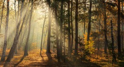 Walk in the woods. Pleasant autumn weather. Sun rays play in the branches of trees.
