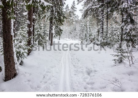 Walk in winter woods. Snow world. The track for cross-country skiing. Beautiful and unusual roads and forest trails of Russia. #728376106