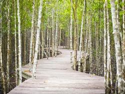 walk way through Mangrove forest