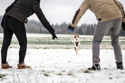 Walk with the dog on winter season, with snow Couple calling the running dog