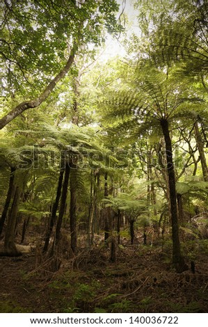 Walking and hiking through virgin rainforest in New Zealand with giant tree ferns.