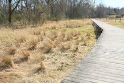 Walking boards along some old barley stalks. Springtime along a walking trail in Princeton New Jersey