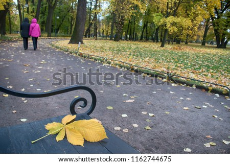 Walking forgotten on the bench of the yellow leaf of a chestnut. Autumn in the Park and on the streets, defoliation, yellow leaves. Walking along the city streets and alleys of the Park